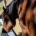 Für die Fütterung von Pferden